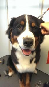 Kijk eens naar deze knappe vent Bailey. Wat geniet hij met het reinigen van zijn oren.